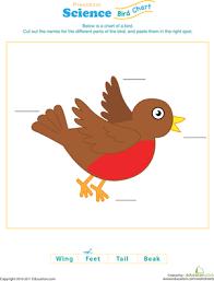 Birds Chart For Kindergarten Test Your Bird Knowledge Worksheet Education Com