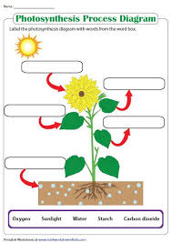 Label The Photosynthesis Diagram Science Worksheets