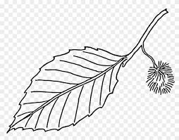 Large Leaf Template Beech Leaf Outline Free Transparent Png