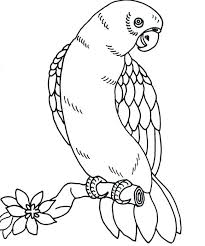 Bird Coloring Page Google Search Drawing Bird Bird Coloring Page