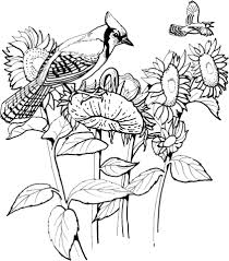 Small Picture Blue Jay and Sunflowers coloring page Free Printable Coloring Pages