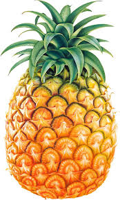 pineapple clipart. pineapple clipart black and white free 2 - cliparting.com more n