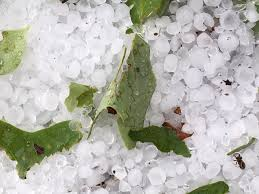 """Tyler Allender on Twitter: """"Lots of hail at Jeannine Horton's house in  southern Greene County! Sadly, it actually destroyed her vegetable gardens.  @NWSMorristown #wjhlwx… https://t.co/qFqyJxQ4k6"""""""