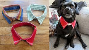 diy dog collar out of a dress shirt