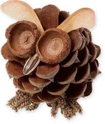 Another pine cone owl with great ideas for the eyes = acorn tops.