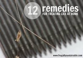 frugally sustainable s tip for treating lice naturally at home