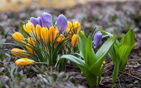 bulb crazy plan a spring bulb garden