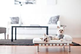 modern dog furniture. modern pet bed daybed and lounger small dog cat 25 furniture h