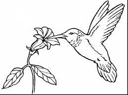 Small Picture coloring pages of birds and insects alphabrainsznet