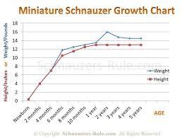 Miniature Schnauzer Growth Rate Chart Puppy Growth Chart