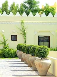 potted plants for patio potted outdoor plants potted plants for patio shade