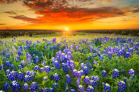 Image result for wild flowers