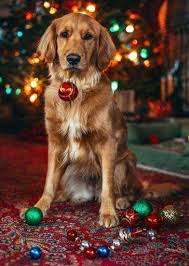 Many cute christmas dogs on your screen, floating shining particles, parallax effect! Christmas Dog Phone Wallpaper Pets Lovers