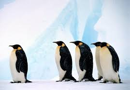 Emperor Penguins Wwf