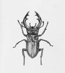 Pointillism Or Stippling Illustration Of A Stag Beetle Art Drawing