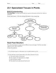 23 1 Plant Tissues Worksheet
