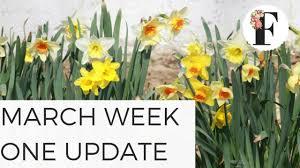 march week one garden update cut flower farm gardening for beginners easy to grow plants spring