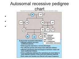 Interpreting Pedigree Charts Tips For Interpreting Pedigree Charts And Understanding