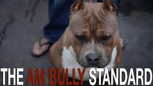 THE AMERICAN BULLY BREED STANDARD - YouTube