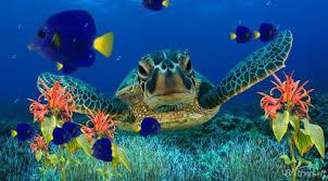 Live Fish Tank Screensaver Aquarium Screensaver Coral Reef