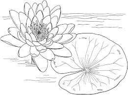 Small Picture Printable Lily Pad Coloring Pages Coloring Me