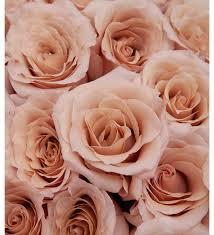 <b>Букет</b>-<b>соло пионовидных роз</b> Quicksand (15,25,35,51 или 75 ...