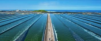 Algae Farm Design Australian Researchers Design A Solar Process For Algae