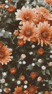 Flowers Aesthetic Wallpapers ...