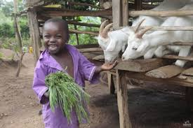 teaching children the beauty of giving gifts from heifer international