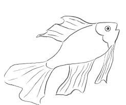 Disegni Con Pesci Per Bambini Com Con Pesci Da Disegnare Facili E