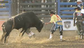 rodeo bull charging. Simple Rodeo Bull Charging Fighter To Rodeo Bull Charging H