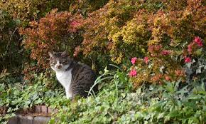 cats out of garden spaces with these tips