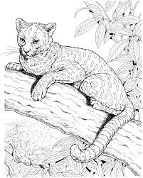 Small Picture Free Jaguar Coloring Pages