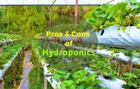 advantages and disadvantages of hydroponics