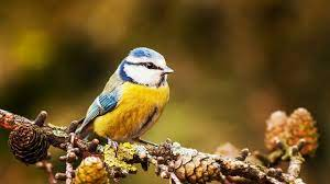 """Peaceful Relaxing Instrumental Music, Meditation Calm Music """"Autumn Birds""""  by Tim Janis - YouTube"""