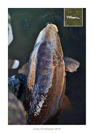 Carp Catalogue 2019 En By Shimano Europe Fishing Holding
