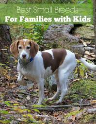 small dog breeds that are great with kids