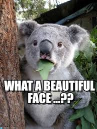 What A Beautiful Face ...?? - Surprised Coala meme on Memegen via Relatably.com