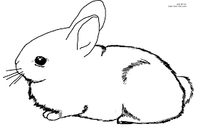 Small Picture Adorable Baby Cottontail Rabbit Bunny Coloring Page