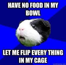 Image detail for -Jumpy Guinea Pig meme   quickmeme   Guinea pig ... via Relatably.com