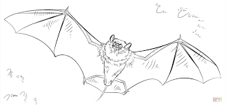Small Picture Bat coloring page Free Printable Coloring Pages