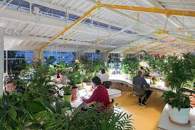 plants for office space.  office selgascano adding green plants to offices  to plants for office space