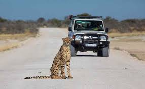 namibia wildlife holidays in africa