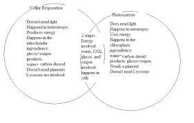 Chapter 8 Photosynthesis And Respiration Concept Mapping Venn Diagram Answers Photosynthesis And Cellular Respiration Venn Diagram