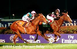 Breeders Cup Charts 2010 2010 Breeders Cup World Championships Results