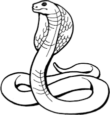 Small Picture Snake Coloring Pages Coloring Kids