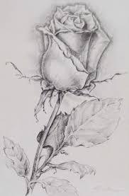 Pin Di Franca Nozza Su Disegni Disegni Di Rose Disegni A Matita E