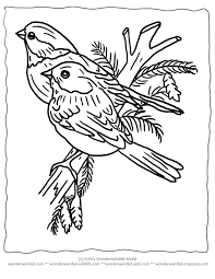 printable christmas coloring pages birds for wonderweirded coloring pages for kids robin coloring page birds coloring pages 7188 adjanass creations com on bird printable coloring sheet
