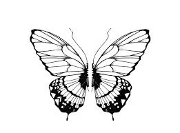 бабочки эскизы татуировка 1 бабочки мотылек насекомые тату