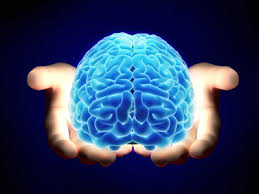 Image result for images of brain in public domain